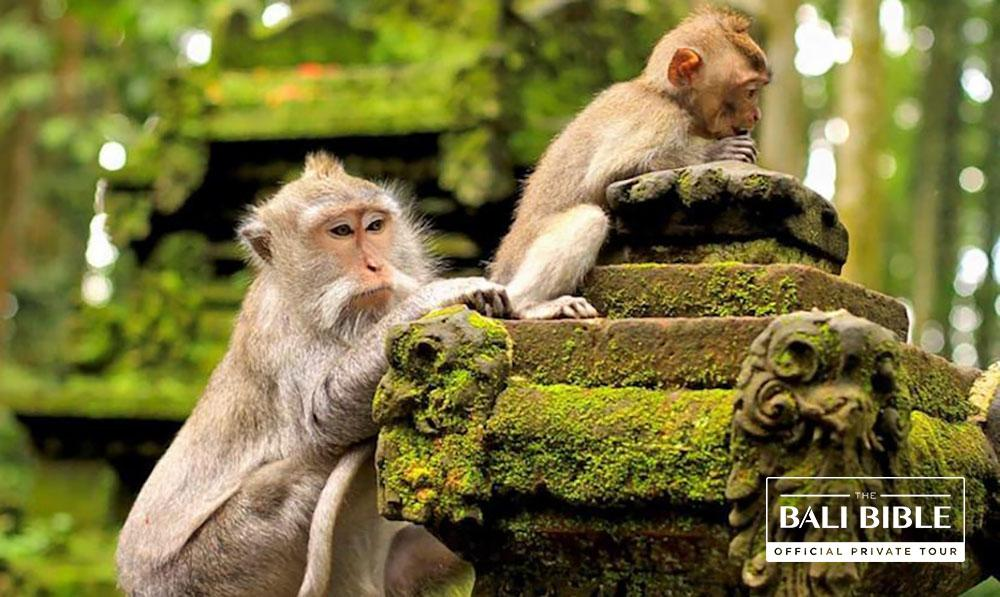 The Monkey Forest Tour by The Bali Bible