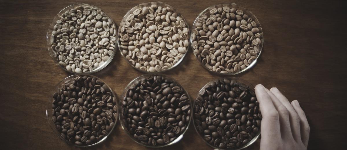 arabica-vs-robusta-beans