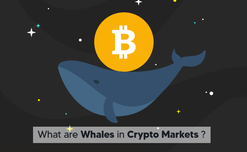 What are whales in crypto markets
