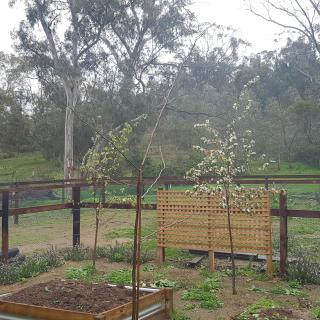Orchard View Barossa Valley On-Site Camper Hire
